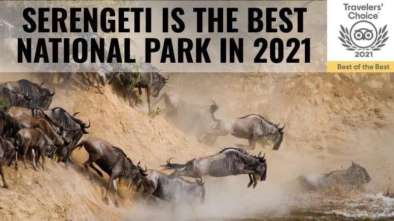 Serengeti Best National Park 2021 Tripadvisor