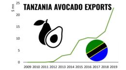 Tanzania avocado exports