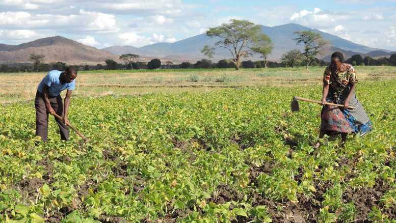 IFAD Tanzania small scale farmers grant 2021