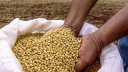 Soybeans Tanzania Iringa